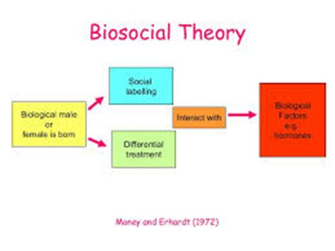 three major sociological theories essay